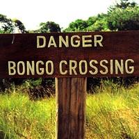 Bossa Nova Beatniks: Danger Bongo Crossing