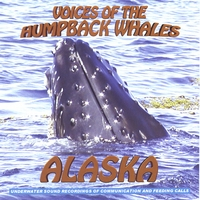 Amazing feeding calls, voices, sounds and songs of the humpback whales of Glacier Bay | VOICES OF THE HUMPBACK WHALES ALASKA