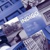 Dan Siegel: Indigo