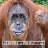 Delyn Christian And The Fretshop Band | Peace, Love And Monkeys