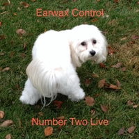 Earwax Control | Number Two Live