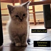 Extraneous Solutions | Let's Get a Cat
