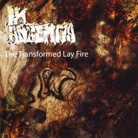 In Absentia | The Transformed Lay Fire