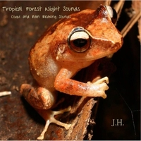 J H  | Tropical Forest Night Sounds: Coqui and Rain Relaxing Sounds