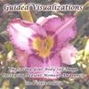 Joe & Laura Pallatin: Guided Visualizations