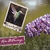 KIM DIVINE: Hummingbird