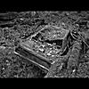 March Rain: Distorted Wilderness
