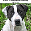 Peggy Miller Sheffer: He Waits All Day for Freedom (Spike