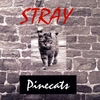 Pinecats: Stray