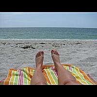 Stingrays: Ocean View